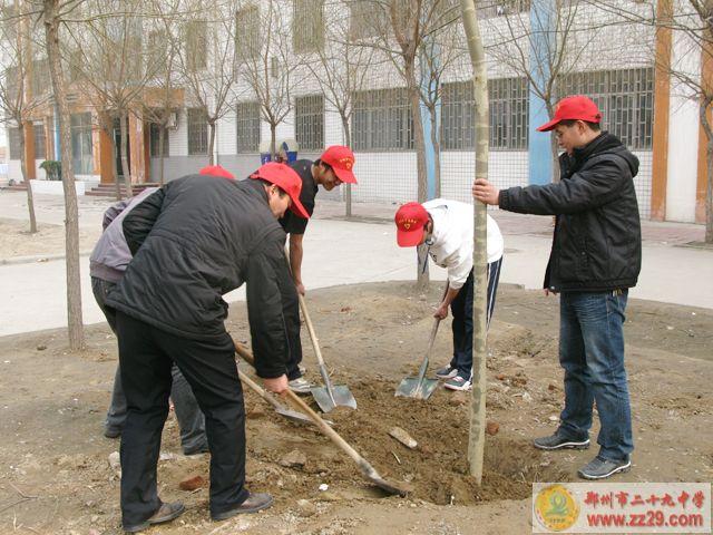 二十九中青年师生志愿者积极开展植树活动
